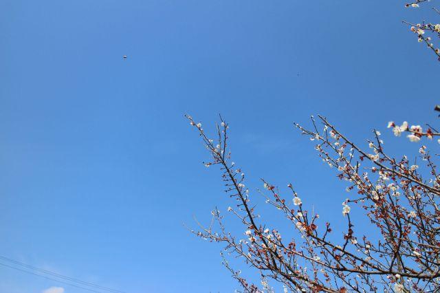 梅とみつばち1
