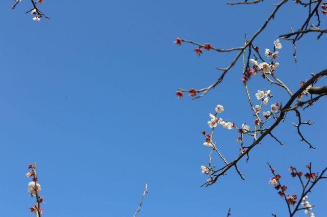 梅とみつばち3