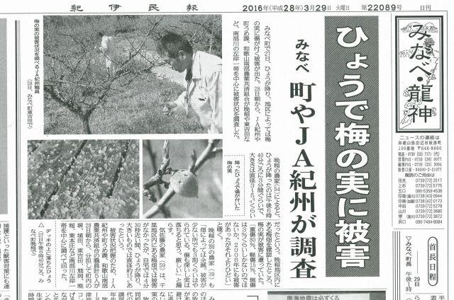 新聞記事ひょう被害2016.3.28